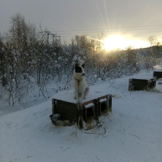 Dog sat on the Tucker Box