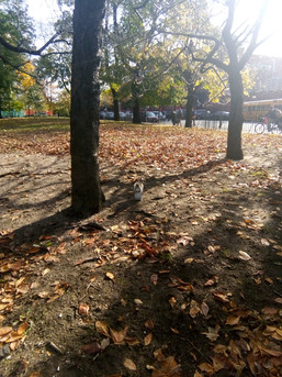 Squirrel in Park