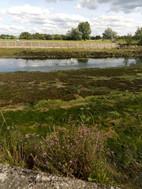 Nairn River