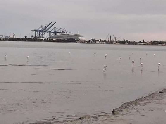 Port Walvis Bay