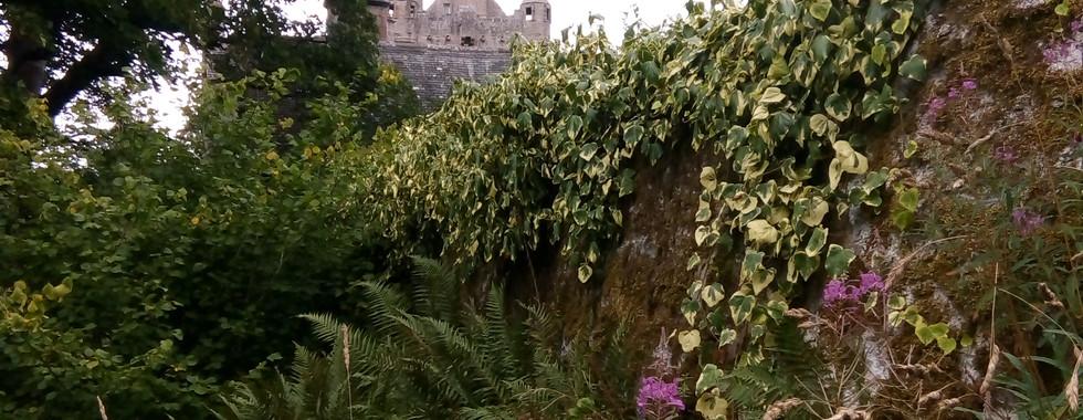 Castle seen from Wild Garden