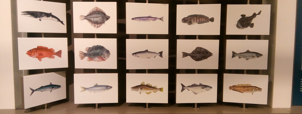 Fish in the region