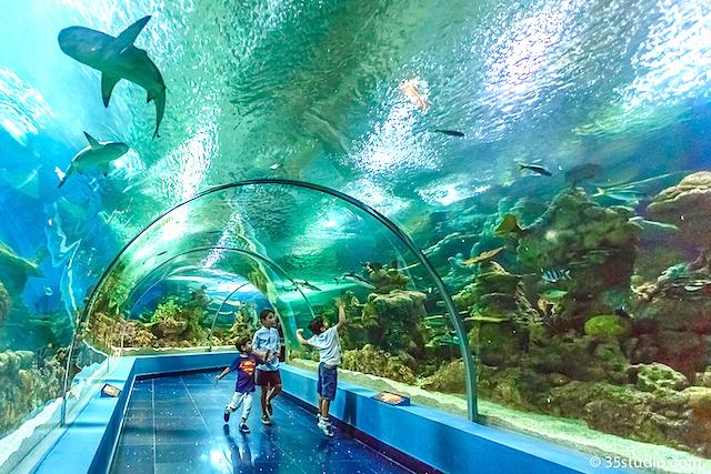 Faqih Aquarium