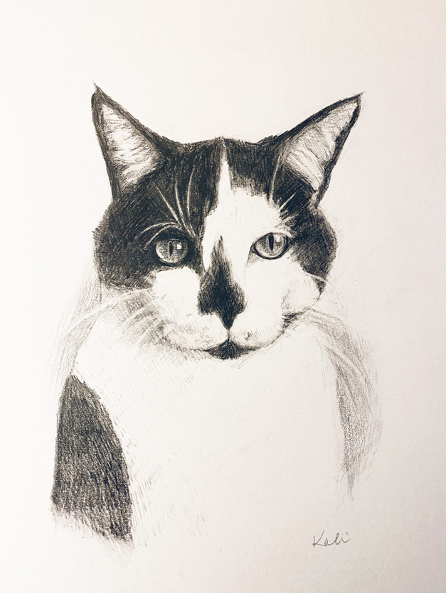 Cat portait 1