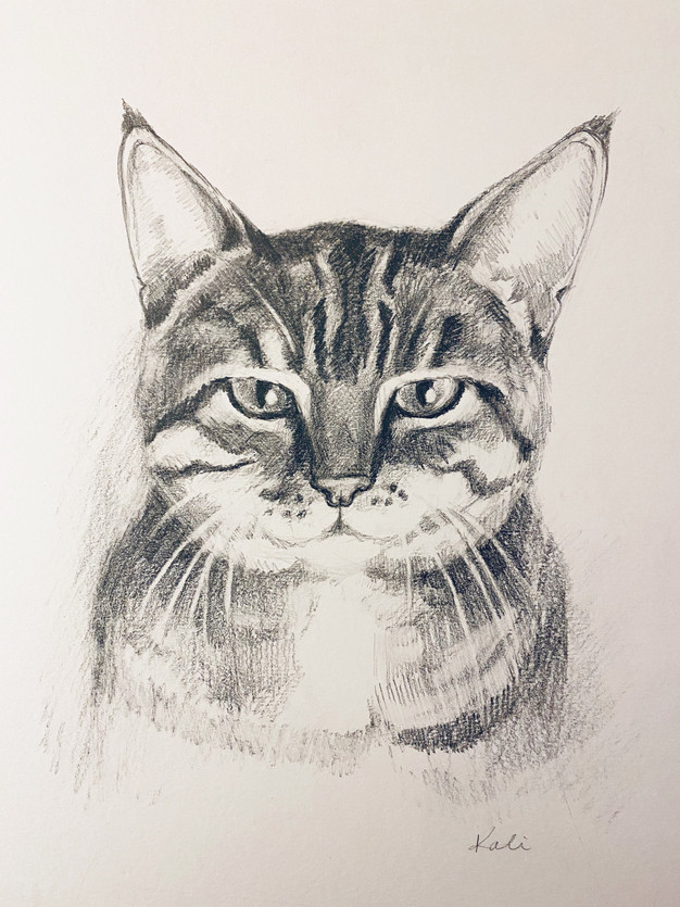Cat portrait 2