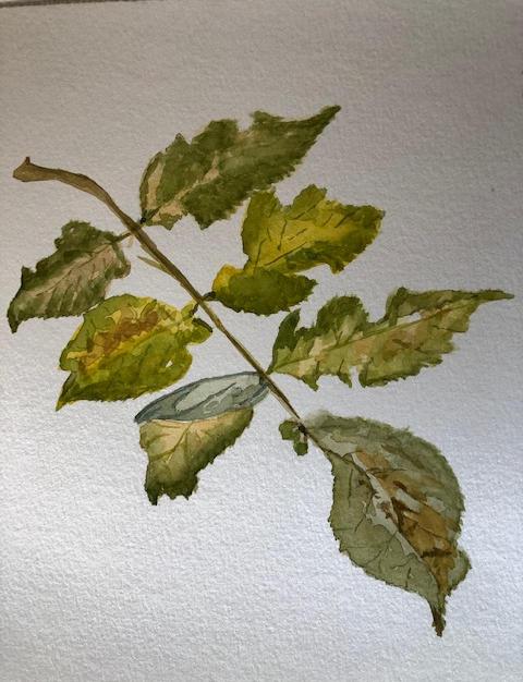 Ruth - green leaves