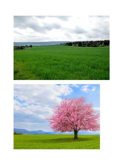 onetree.jpg