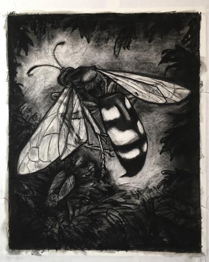Cicada_Killer_19x15w.jpg