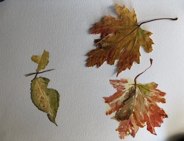 Ruth red_grnleaves