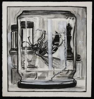 Cicada Killer in Jar