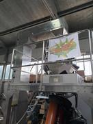Lavorazione Marroni dell'Etna 06_Az. Agr