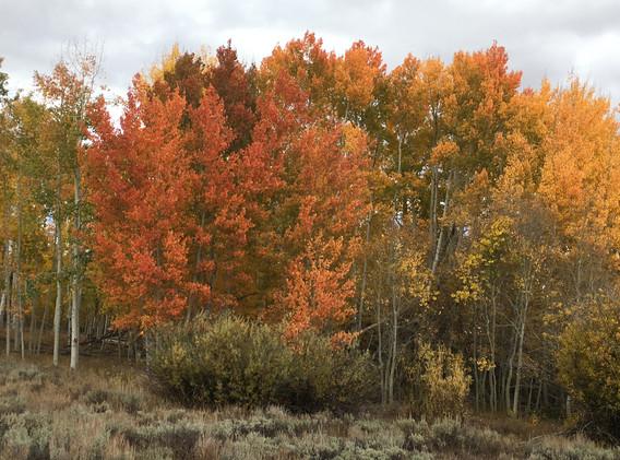 Fall Colors