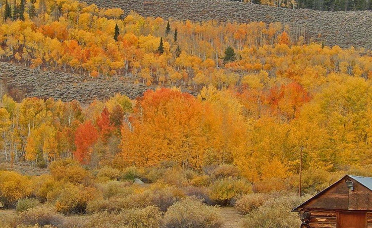 Fall w_shed
