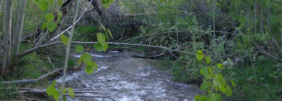 Water through the aspens