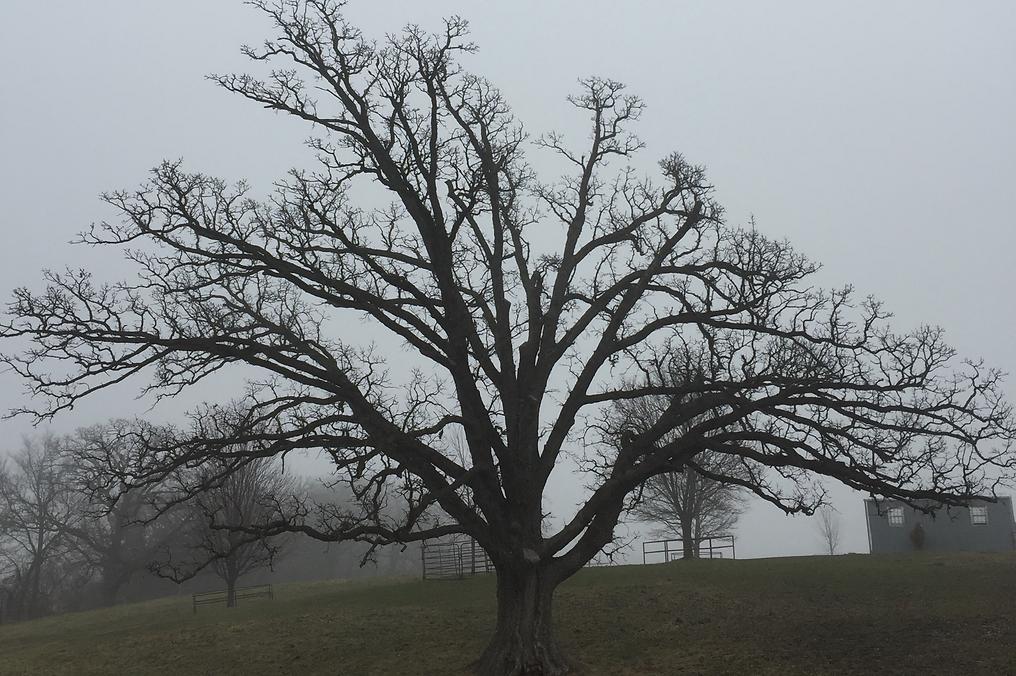 TreeGhost.png