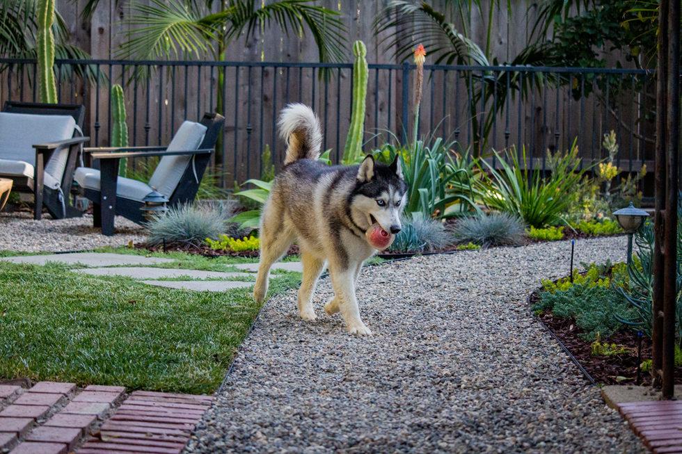 Backyard Landscape Design Gravel Path
