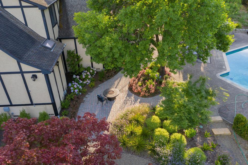 Backyard Tree Canopy