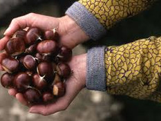 The Annual Chestnut Gathering!