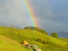 The Pot of Gold Can Be Found At SheepDung!