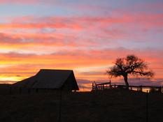 Summer Sunsets at SheepDung!