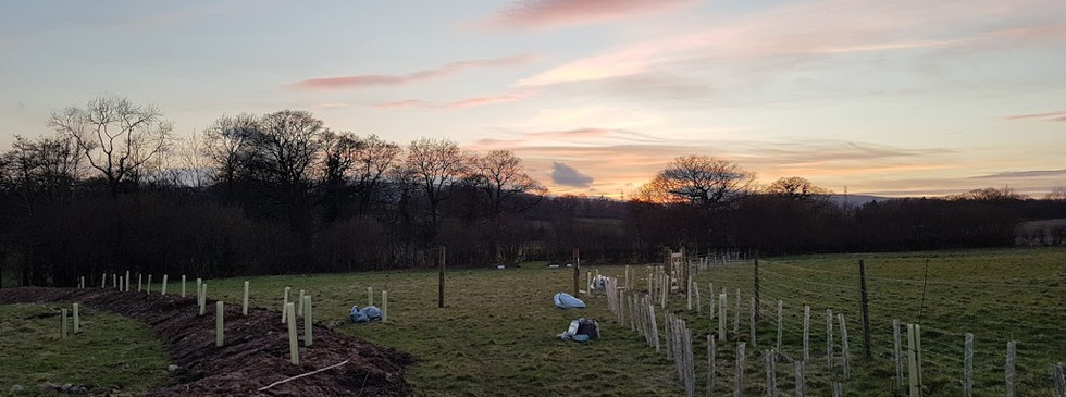 the sun sets on a 2300 trees for the first time in hundreds of years