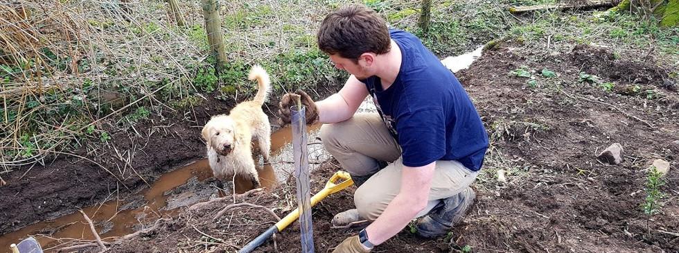 restoring hedges