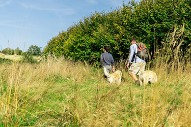 walking through the meadows