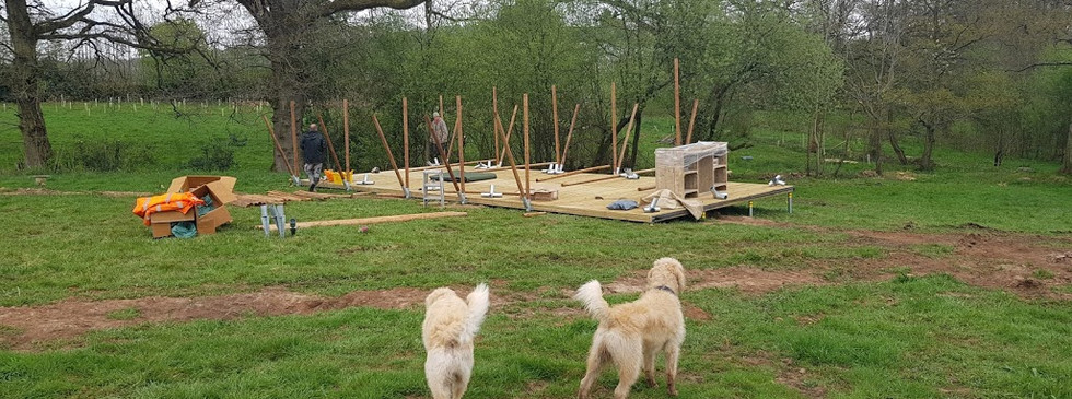 The dogs supervising