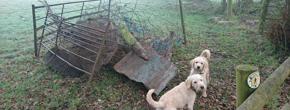 some of the barbed wire we removed