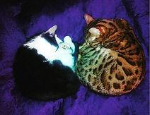 koty dwa.jpg