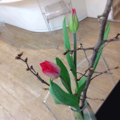 秋田市中通美容室グラスルーツブログ