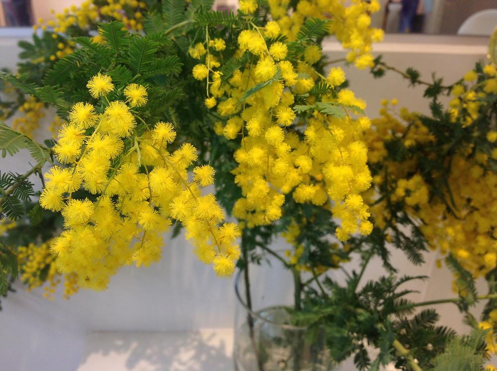 ミモザの花グラスルーツ美容室