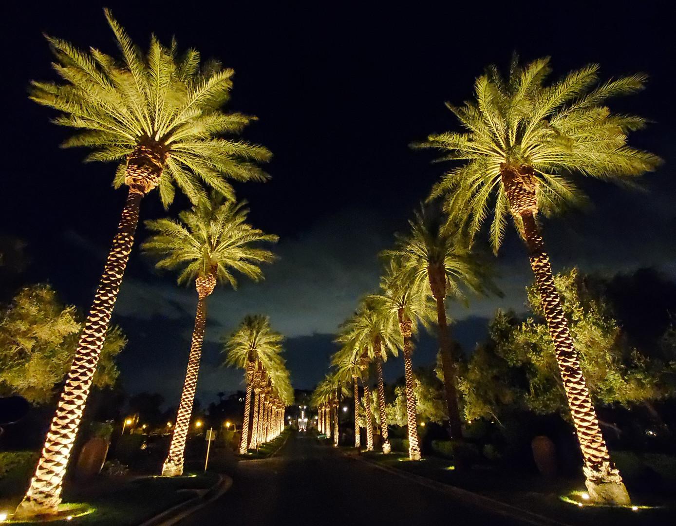 Lake Las Vegas Palm Trees.jpg
