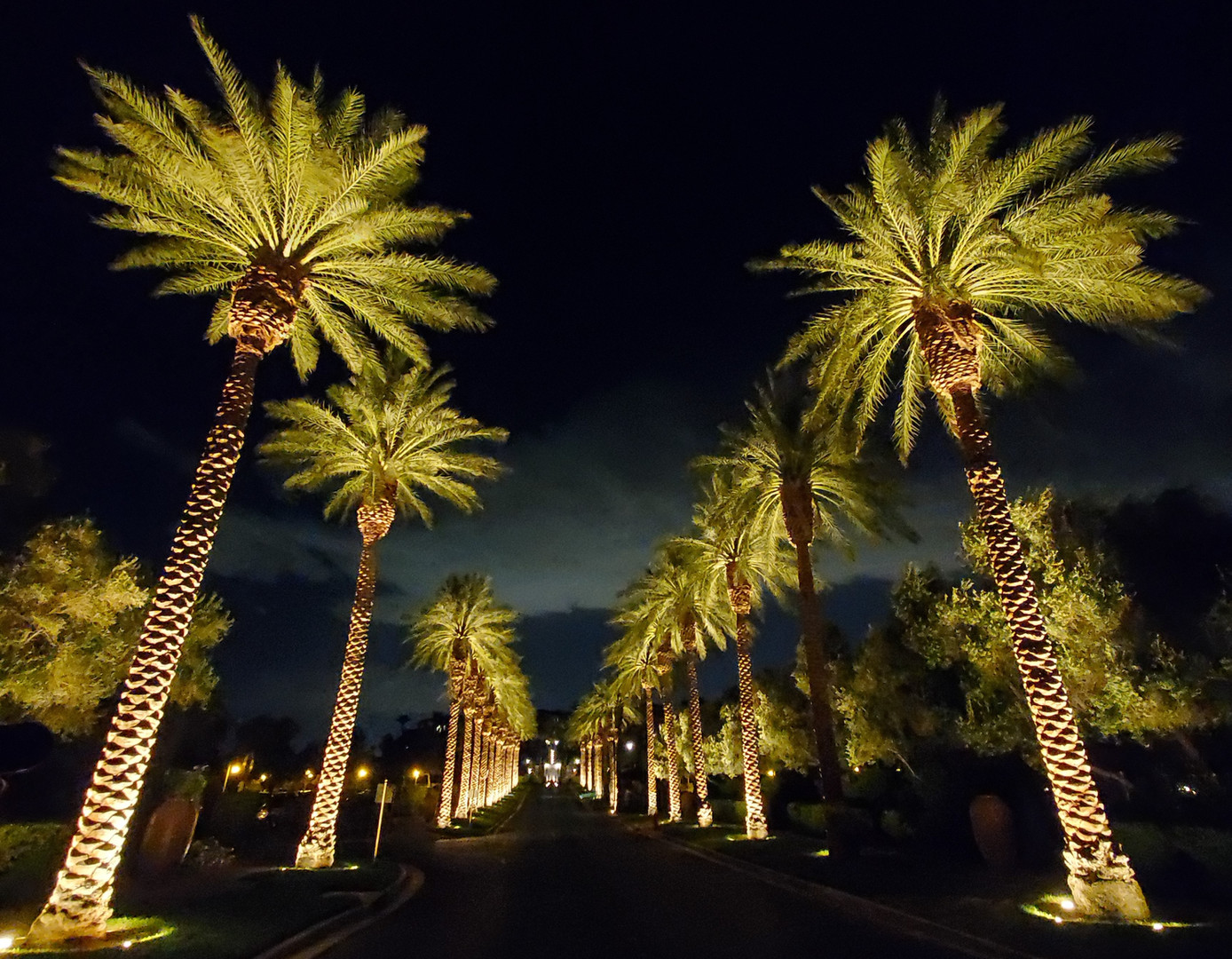 Lake Las Vegas Palm Trees.jpg