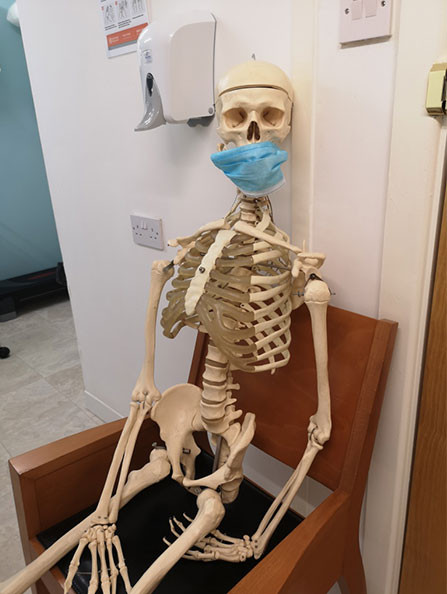 skeleton-anatomical-physio.jpg
