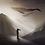 Thumbnail: Poster Baleines