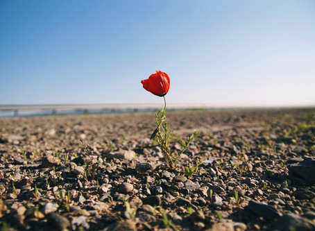 Le #interviste di A&B: l'importanza della resilienza per sopravvivere in un mondo VUCA.