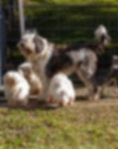 12_Hundegruppe_kompr .jpg
