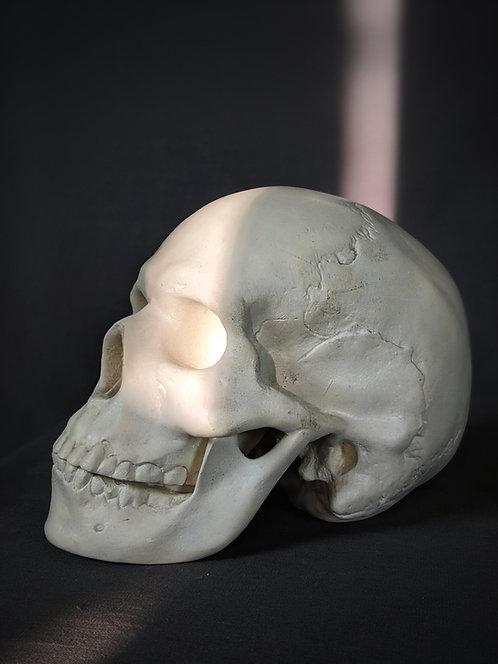 Crâne moulé sur nature