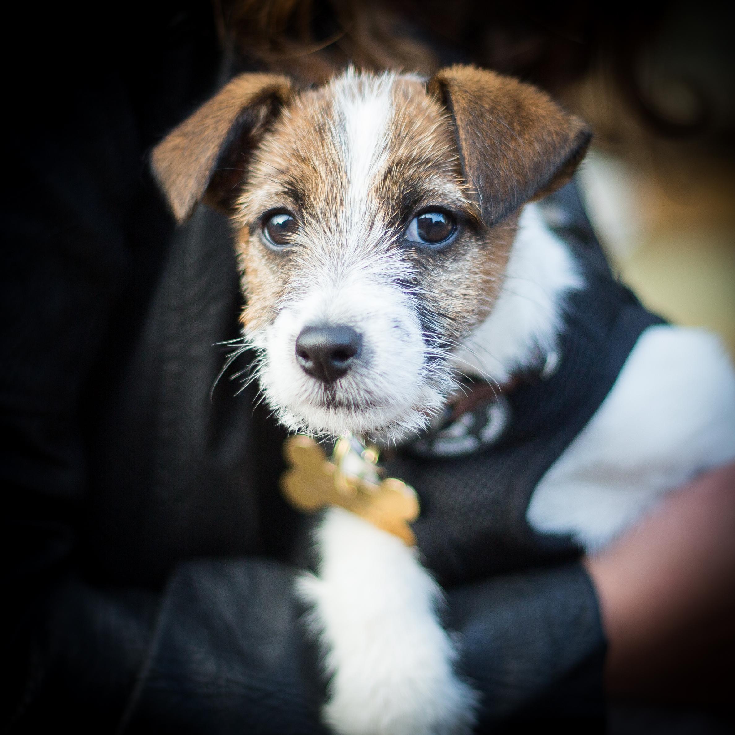 Dog 1, Lewes