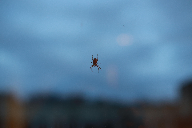Spider, Falmer