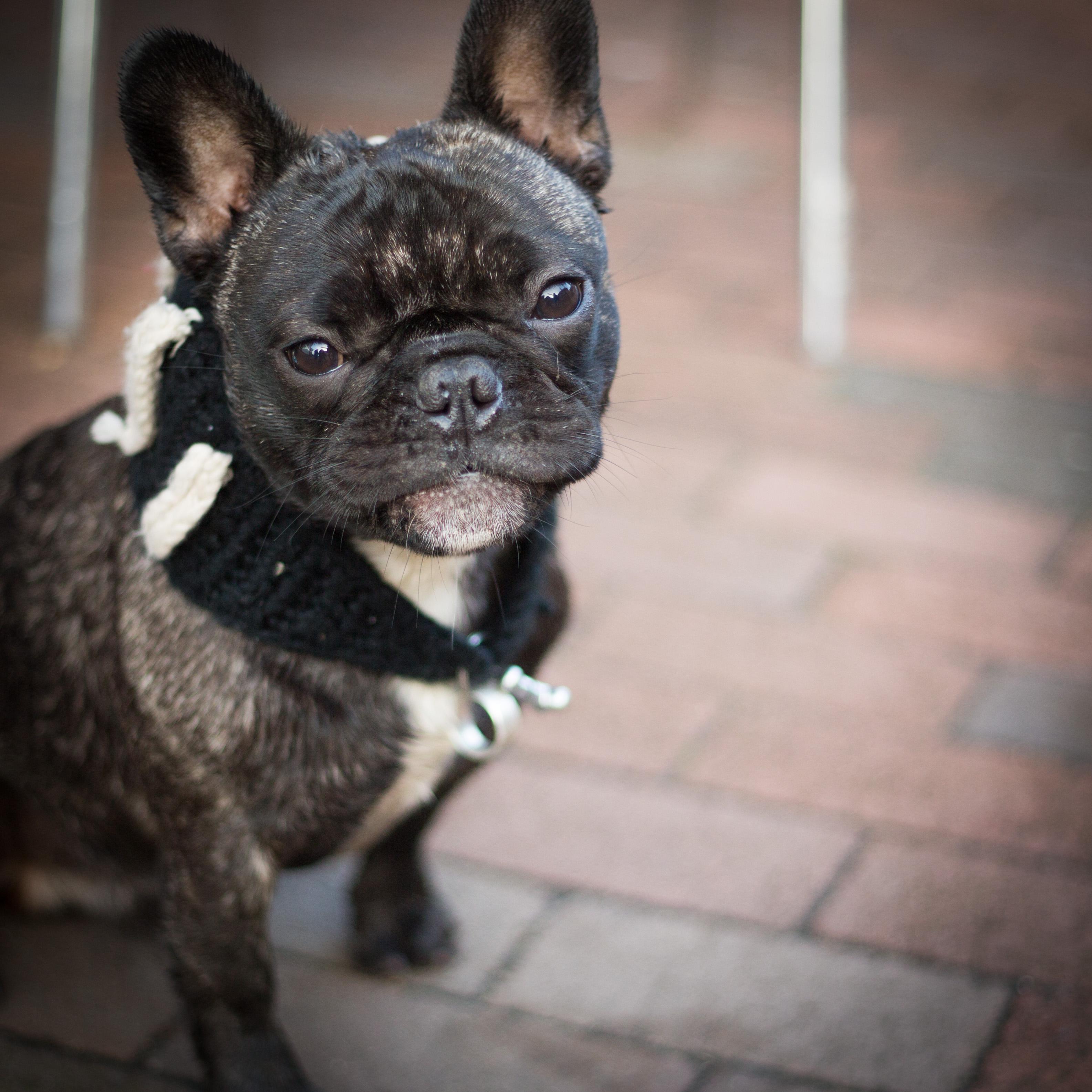 Dog 2, Lewes
