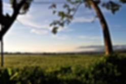 Rwanda Ruhengeri Scenery
