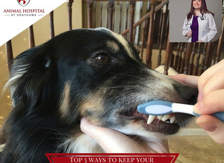 Top 5 Ways to Keep Your Pet's Mouth Healthy at Home From Your North Scottsdale Veterinarian!