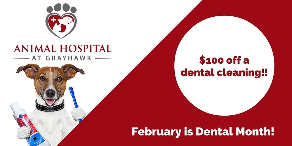Animal Hospital at Grayhawk's Dental Month Special