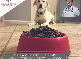 Top 5 ways to tell you are feeding your dog the WRONG food.