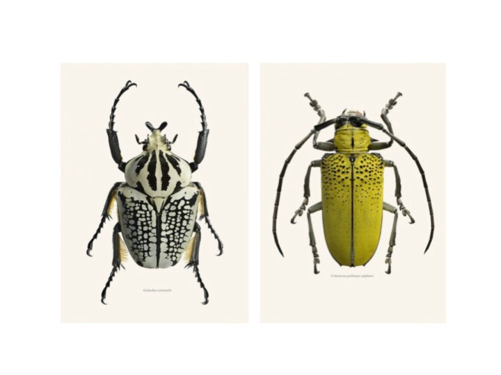 We love these prints of insects from Graham and Green