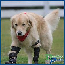 Front Leg Prosthetics