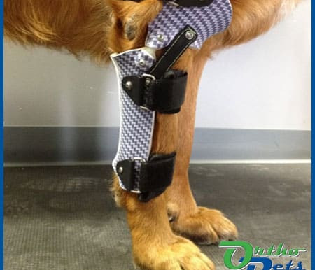 Forelimb Prosthetics – Is My Pet or Patient a Candidate?