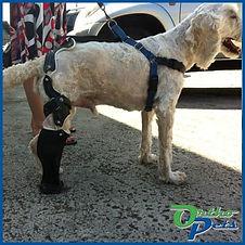 Back Leg Prosthetics
